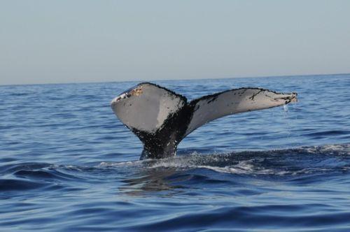 Los Cabos Ballenas Viajeras